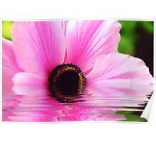 """Pink Anemone"" Poster"