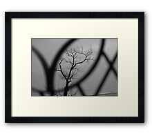 Through the looking glass... Framed Print