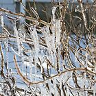 Icicles  by Gail Falcon