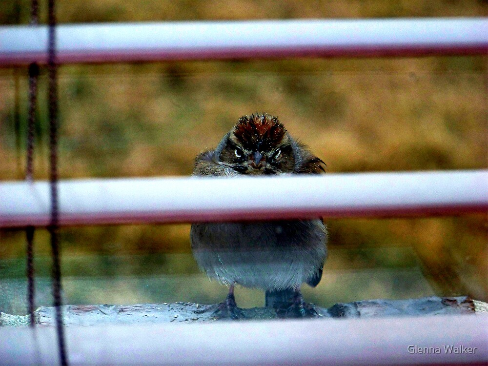 Don't Laugh - It's Cold Out Here! by Glenna Walker