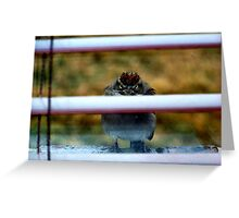 Don't Laugh - It's Cold Out Here! Greeting Card