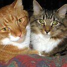 73 - MAO & MITCH CUDDLED TOGETHER (D.E. 2009) by BLYTHPHOTO