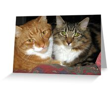 73 - MAO & MITCH CUDDLED TOGETHER (D.E. 2009) Greeting Card