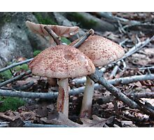 the Woodland Mushrooms Photographic Print