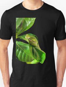 Little frog T-Shirt