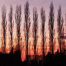 Winter Evening Sky by Franco De Luca Calce