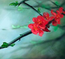 Cherry Blossom by RedSparrow