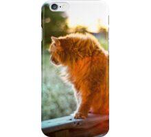 Orange Cat iPhone Case/Skin