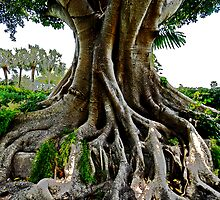 Roots! by cromagnon