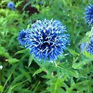 Blue Globe Thistle by lolowe