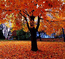 Leaves were Falling by shaunarose