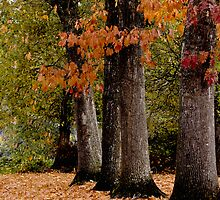 Seasons Change by olivia destandau