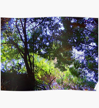 """"""" Forests Reflected"""" Poster"""