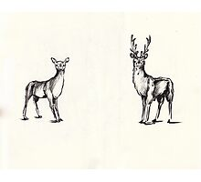 Mr. and Mrs. Deer Photographic Print