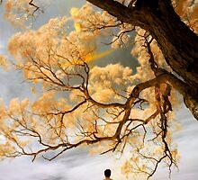 C'est la vie by anwarsalim