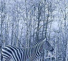 Zebra's winter camouflage by MooseMan