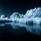 Wetland Pond in IR by Max Buchheit