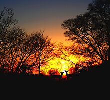 Silhouettes at dusk by trwphotography
