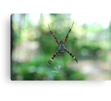 hang on spider man Canvas Print