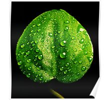Waterdrops Reflecting Poster