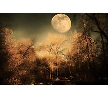 Dark Trees and Moon Photographic Print
