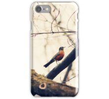 Robin Red Breast iPhone Case/Skin