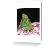 Silver Washed Fritillary Butterfly Greeting Card