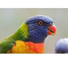 Rainbow Lorikeet Photographic Print