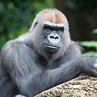 Gorilla by Frank Moroni