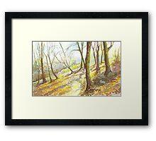 Misty Morning, Woodland Walk Framed Print