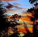 Everglades Sunset  by JKKimball