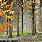 Autumn forest by jimmy hoffman