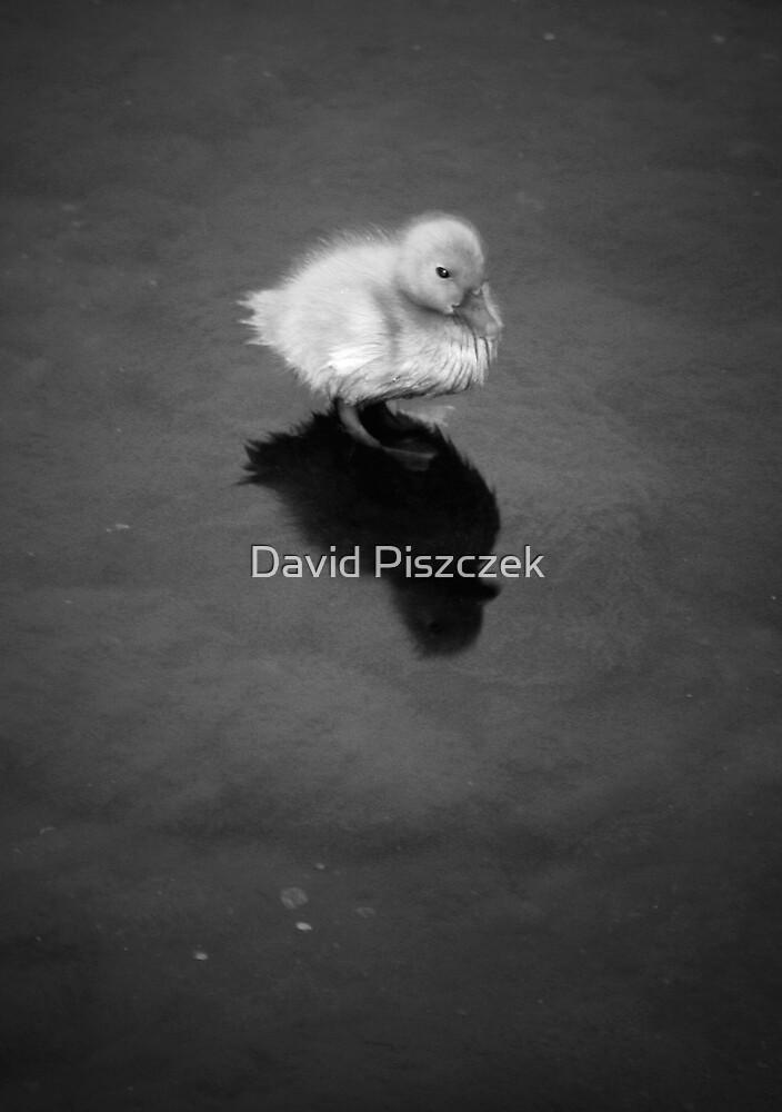 Beginning Realm by David Piszczek
