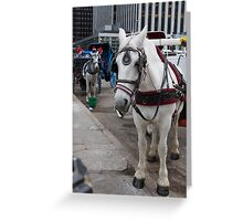central park horses Greeting Card