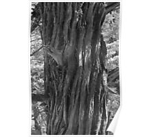 tree in B/W Poster