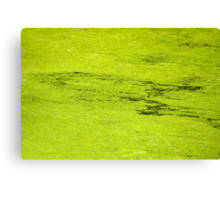 How Much Scum Could a Pond Scum Scum, If a Pond Scum Could Scum Scum? Solved! Canvas Print