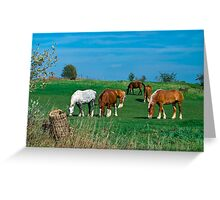 Belgian and Percheron Draft Horses on a Mennonite Farm Greeting Card
