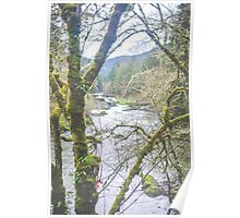 Green Mossy Trees Poster