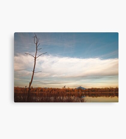 Lake Cassidy in March Canvas Print