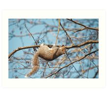 Hang In There Squirrel Art Print