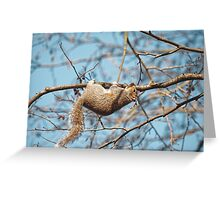 Hang In There Squirrel Greeting Card