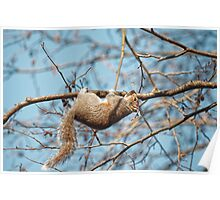 Hang In There Squirrel Poster