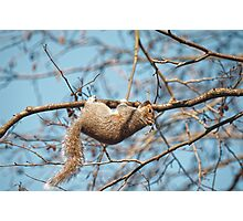 Hang In There Squirrel Photographic Print