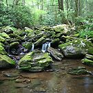 Cool waters of Mineral Creek by Forrest Tainio