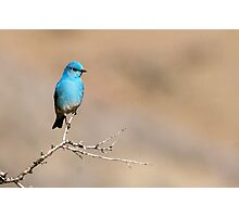 Mountain Blue Photographic Print