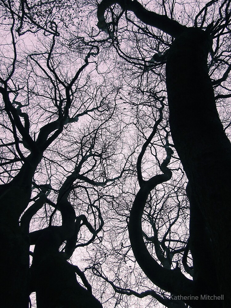 treetops by Katherine Mitchell