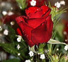 Valentines by WendyJC