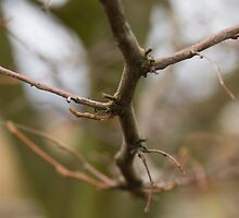 Narrow focus branch. by Andrew Ferguson