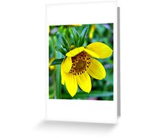 Bashful Bloom Greeting Card
