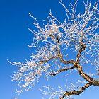 Frozen Beauty by Walter Quirtmair